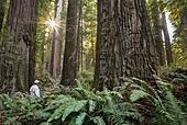 usa-california-redwood-national-and-stat