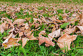 autumn-leaves-laying-on-the-ground-after