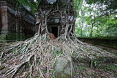 roots-flowing-off-temple-in-koh-ker-camb