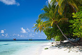 maldives--beach-palm-trees-turquoise-lag