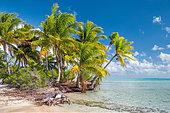 fakarava-french-polynesia-f2ew88.jpg