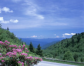 newfound-gap-road-great-smoky-mountains-