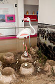 flamingo-on-nest-model-at-jos-antonio-va
