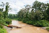 legal-tree-cutting-in-the-danum-valley-c