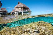 french-polynesia--corals-and-maxima-clam