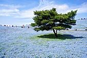 japan-honshu-island-ibaraki-hitachinaka-