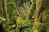 moss-covered-trees-and-fern-covered-fore