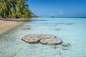 coral-head-in-the-shallow-waters-of-faka