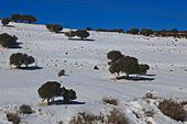 jordan-in-snow-f2cdhk.jpg