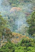 view-of-the-borneo-rainforest-trees-mala