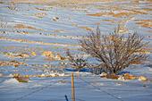 jordan-in-snow-f2cd68.jpg