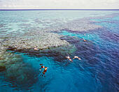 Snorkelling on the Great Barrier Reef; Queensland, Australia - Stock Image