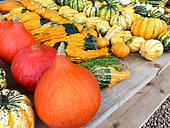 various-types-of-pumpkins-offered-at-mar